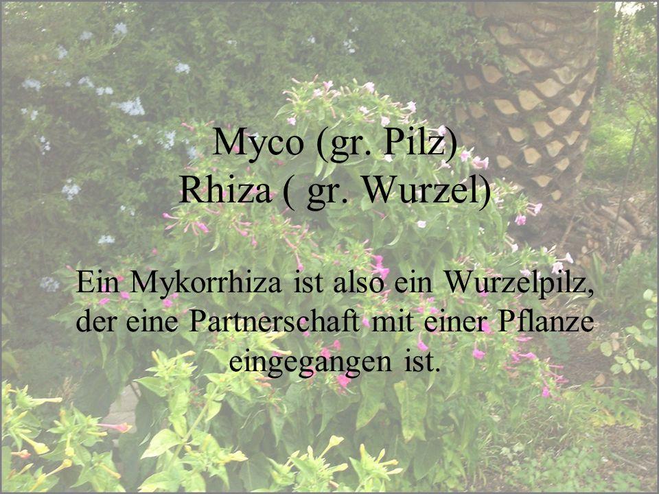 Myco (gr. Pilz) Rhiza ( gr. Wurzel) Ein Mykorrhiza ist also ein Wurzelpilz, der eine Partnerschaft mit einer Pflanze eingegangen ist.