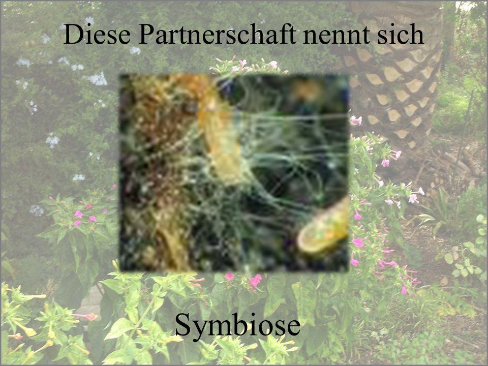 Diese Partnerschaft nennt sich Symbiose