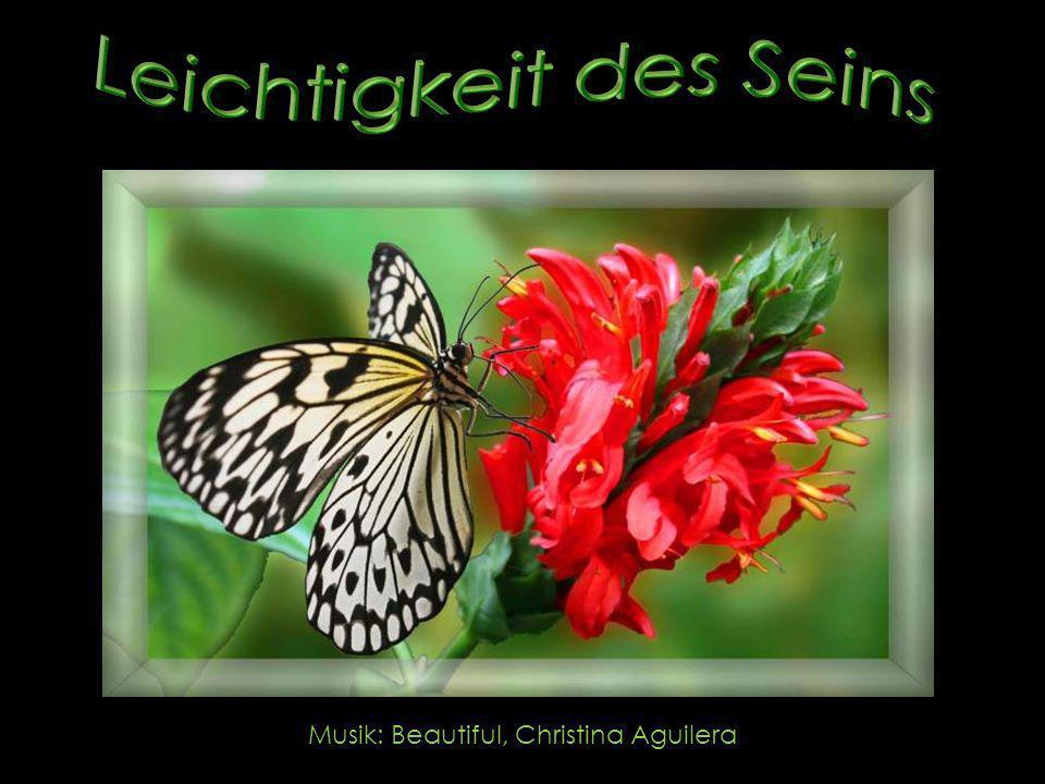 Ich wandere zwischen wilden Blumen und warte, bis aus der Raupe ein Schmetterling wird, ein wunderschöner, und den nenne ich Frieden.