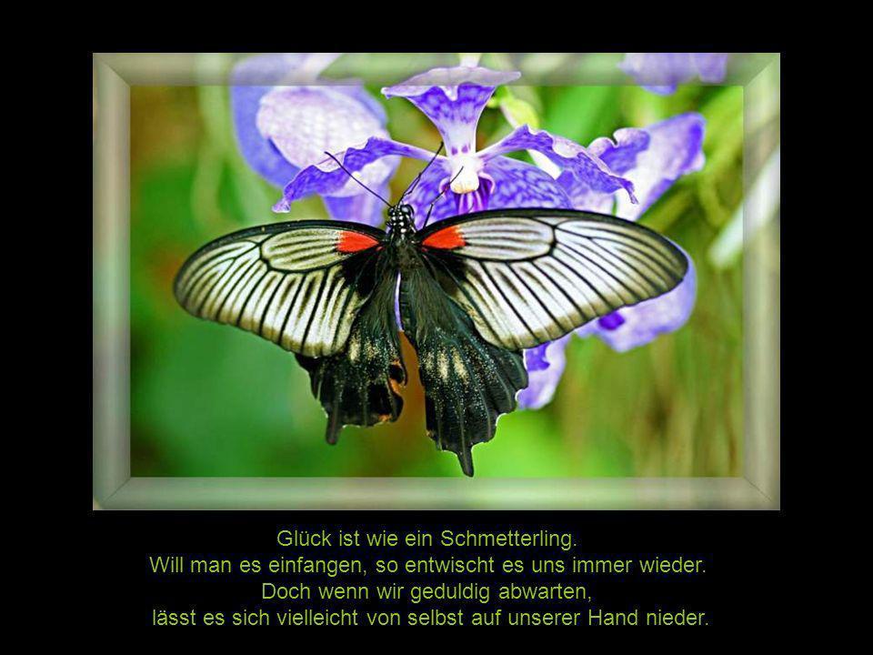 In einer Metamorphose muß man Gewohnheiten abwerfen, halb Schmetterling, halb Raupe kann man nicht fliegen.