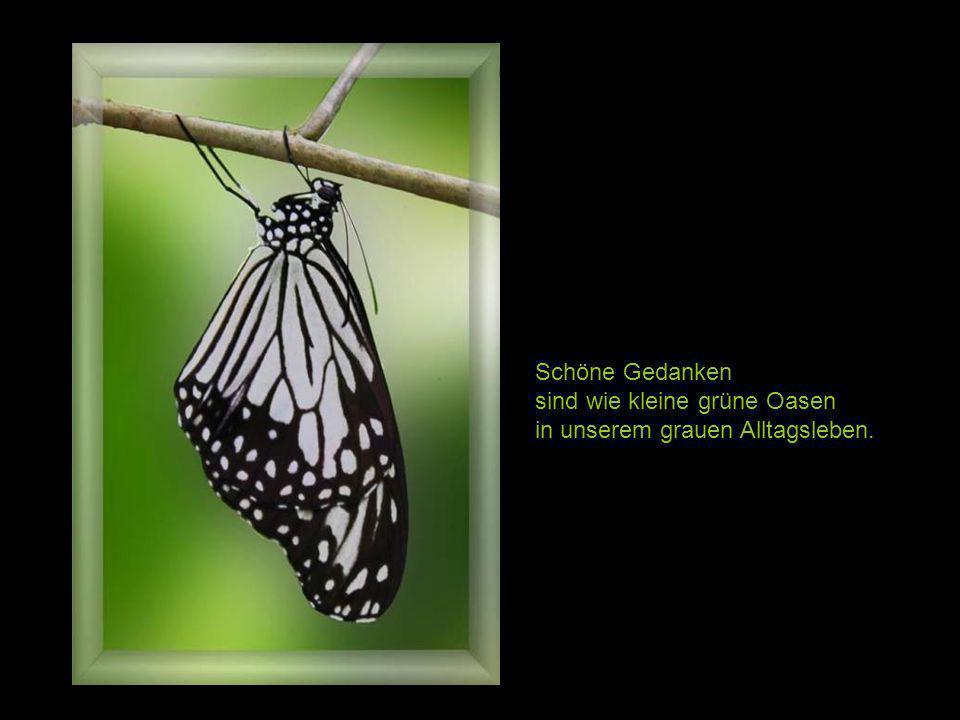 Glück ist wie ein Schmetterling. Will man es einfangen, so entwischt es uns immer wieder. Doch wenn wir geduldig abwarten, lässt es sich vielleicht vo