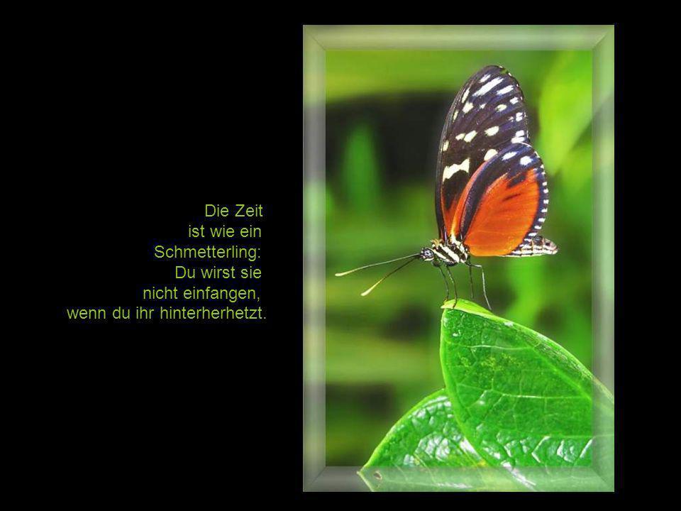 Die Zeit ist wie ein Schmetterling: Du wirst sie nicht einfangen, wenn du ihr hinterherhetzt.