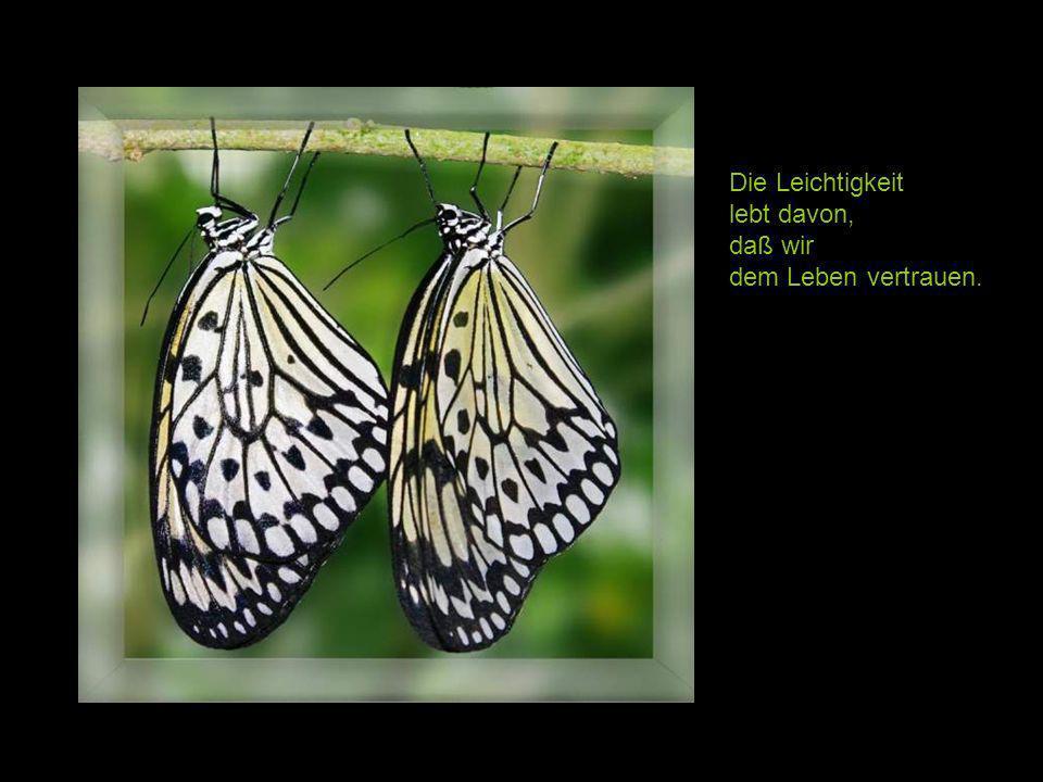 Leben allein genügt nicht, sagte der Schmetterling, Sonnenschein, Freiheit und eine kleine Blume muß man auch haben.