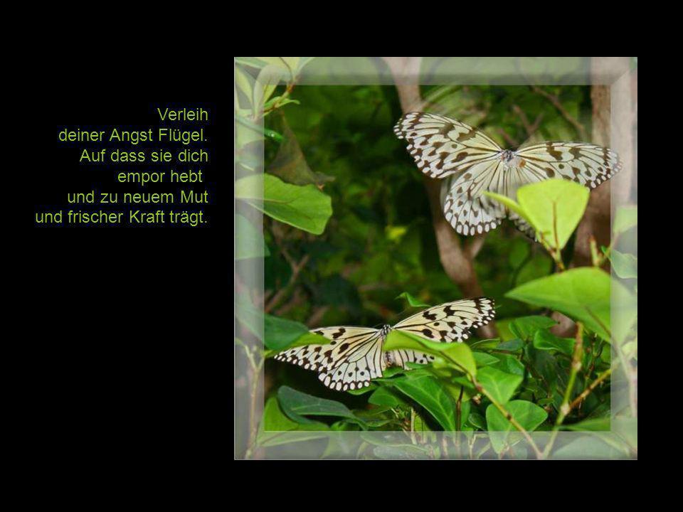 Laß mich ein Engel sein, flehte die Raupe – da erschuf Gott den Schmetterling.