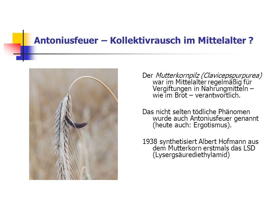 Antoniusfeuer – Kollektivrausch im Mittelalter ? Der Mutterkornpilz (Clavicepspurpurea) war im Mittelalter regelmäßig für Vergiftungen in Nahrungmitte