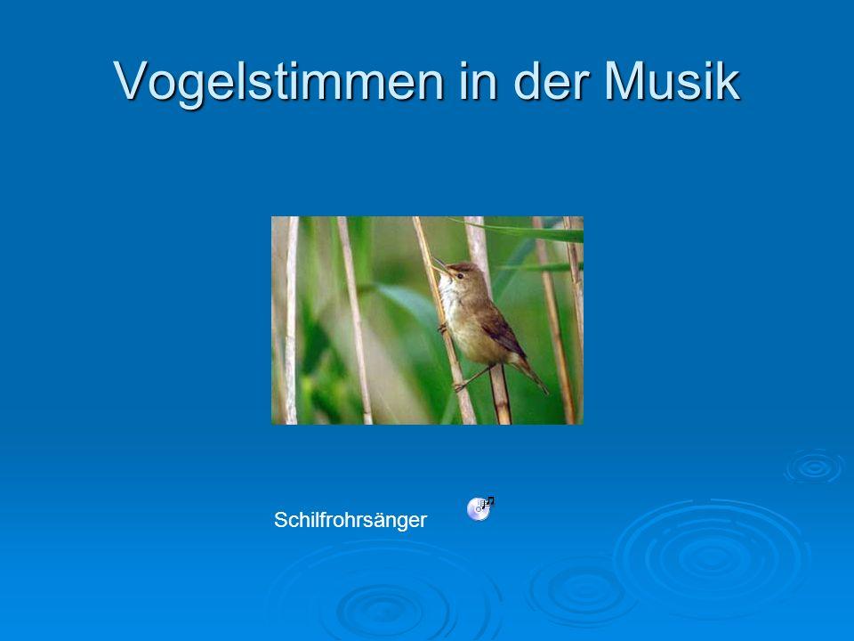 Vogelstimmen in der Musik Schilfrohrsänger
