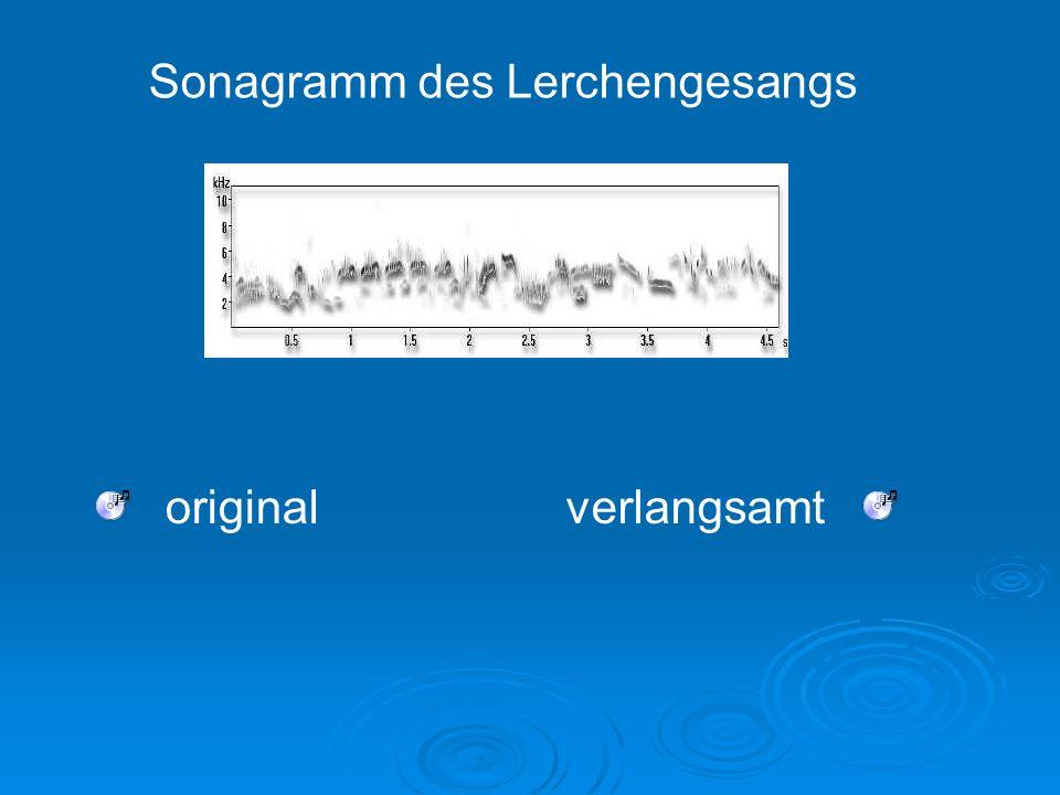 Sonagramm des Lerchengesangs originalverlangsamt
