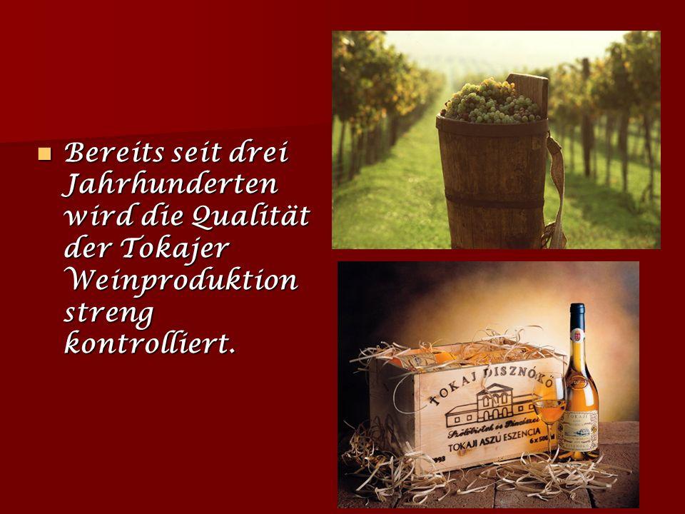 Bereits seit drei Jahrhunderten wird die Qualität der Tokajer Weinproduktion streng kontrolliert.