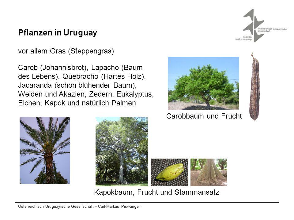 Österreichisch Uruguayische Gesellschaft – Carl-Markus Piswanger Pflanzen in Uruguay vor allem Gras (Steppengras) Carob (Johannisbrot), Lapacho (Baum