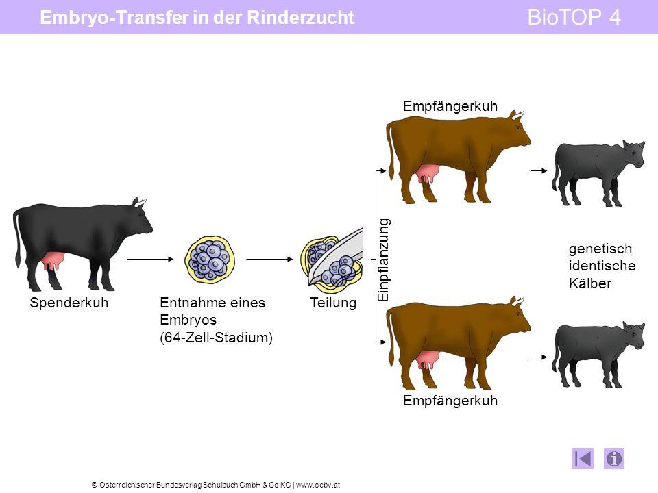 © Österreichischer Bundesverlag Schulbuch GmbH & Co KG | www.oebv.at BioTOP 4 Embryo-Transfer in der Rinderzucht Spenderkuh genetisch identische Kälber Entnahme eines Embryos (64-Zell-Stadium) Teilung Empfängerkuh Einpflanzung