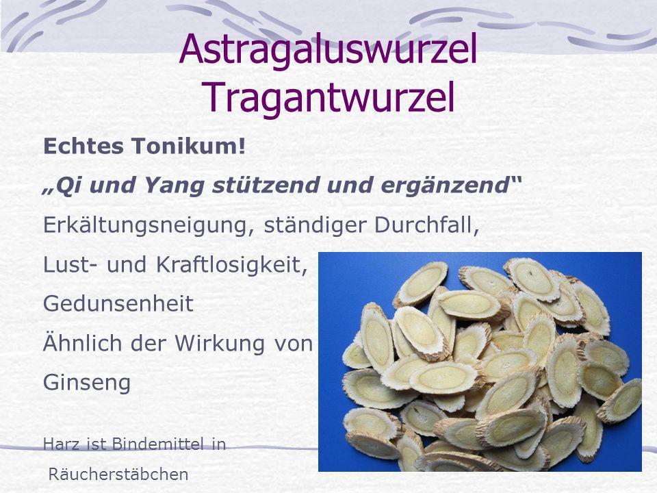 Astragaluswurzel Tragantwurzel Echtes Tonikum! Qi und Yang stützend und ergänzend Erkältungsneigung, ständiger Durchfall, Lust- und Kraftlosigkeit, Ge