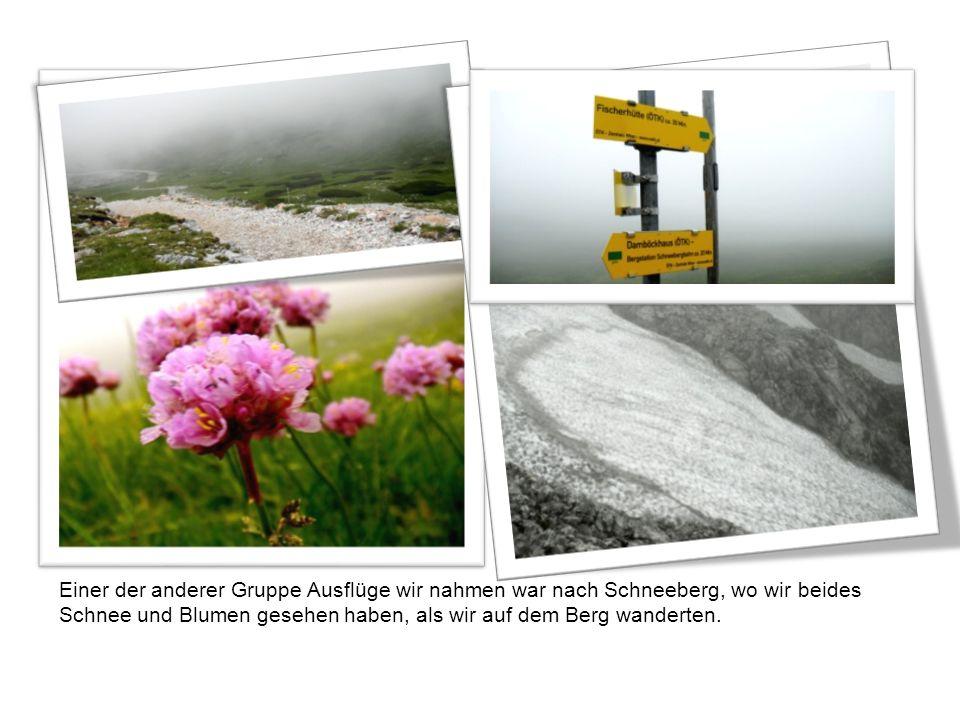 Einer der anderer Gruppe Ausflüge wir nahmen war nach Schneeberg, wo wir beides Schnee und Blumen gesehen haben, als wir auf dem Berg wanderten.