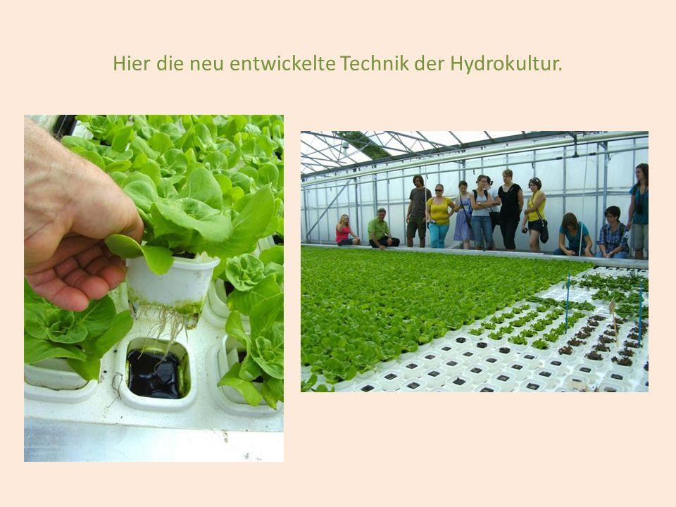 Hier die neu entwickelte Technik der Hydrokultur.