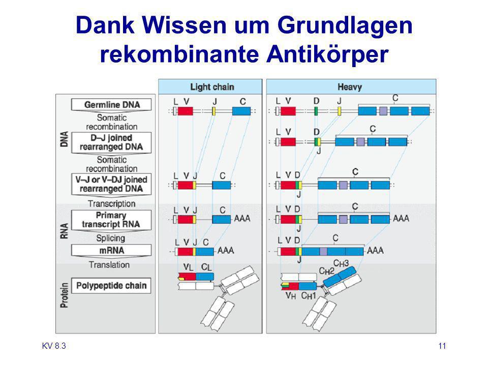 KV 8.311 Diversity of Antibodies is Generated by Gene Rearrangement Dank Wissen um Grundlagen rekombinante Antikörper