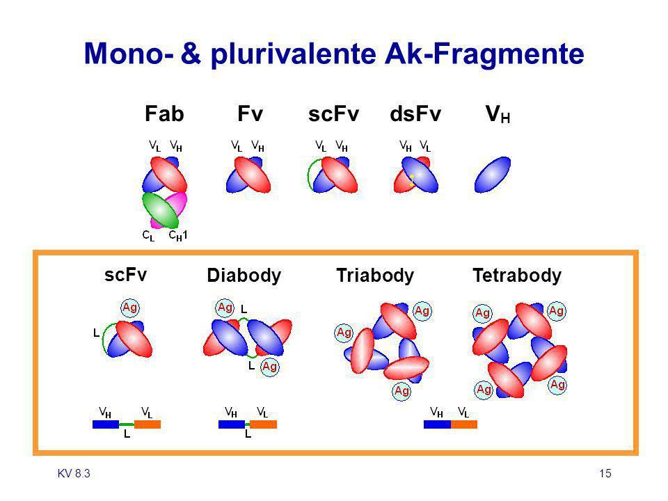 KV 8.315 FabscFvFvdsFvVHVH Mono- & plurivalente Ak-Fragmente scFv DiabodyTriabodyTetrabody