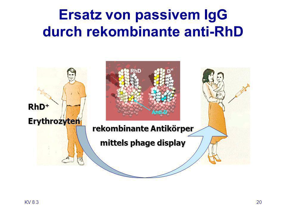 KV 8.320 Ersatz von passivem IgG durch rekombinante anti-RhD RhD + Erythrozyten rekombinante Antikörper mittels phage display