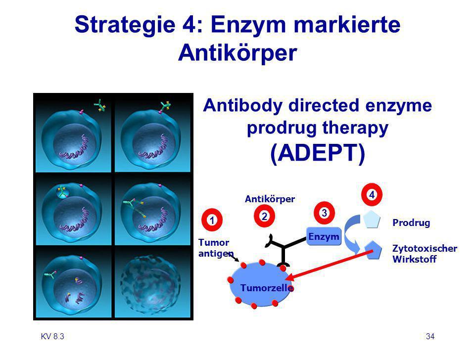 KV 8.334 Strategie 4: Enzym markierte Antikörper Antibody directed enzyme prodrug therapy (ADEPT) Tumor antigen Tumorzelle Zytotoxischer Wirkstoff Pro