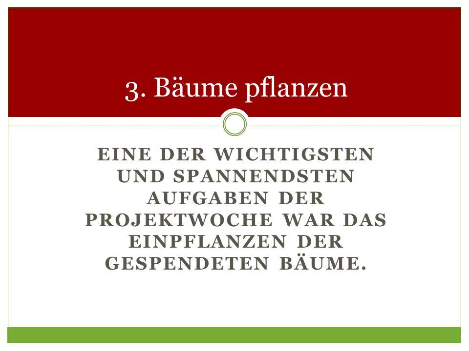EINE DER WICHTIGSTEN UND SPANNENDSTEN AUFGABEN DER PROJEKTWOCHE WAR DAS EINPFLANZEN DER GESPENDETEN BÄUME. 3. Bäume pflanzen