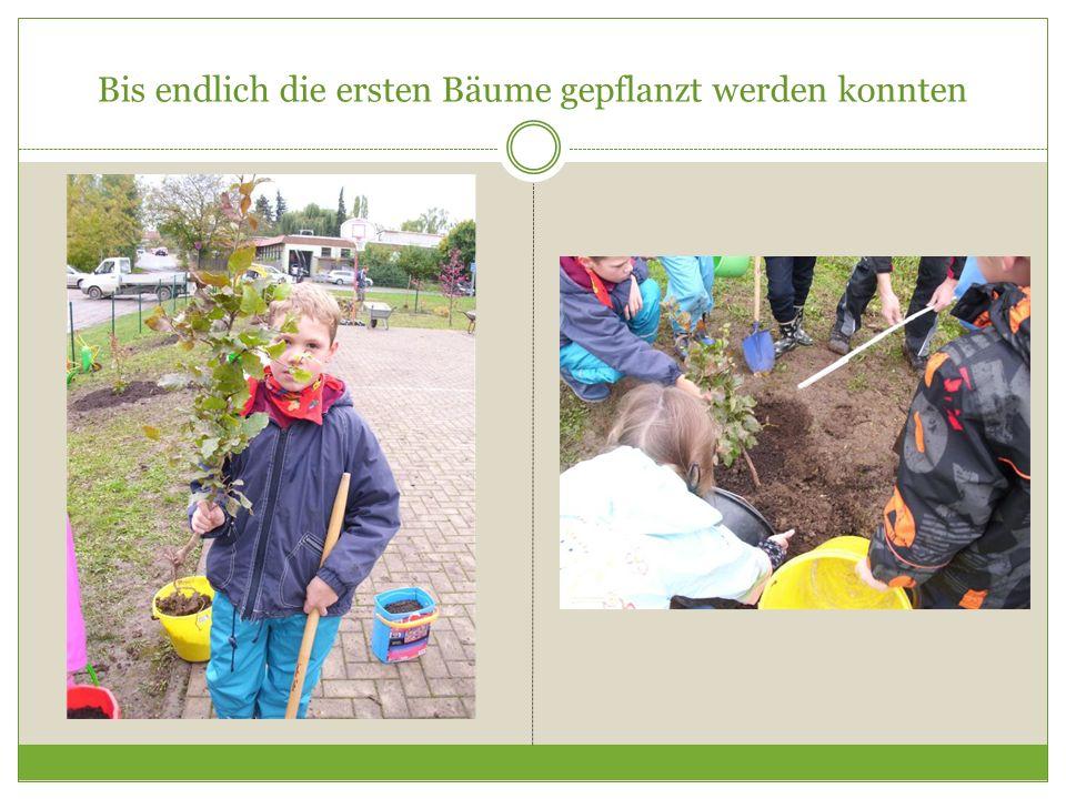 Bis endlich die ersten Bäume gepflanzt werden konnten