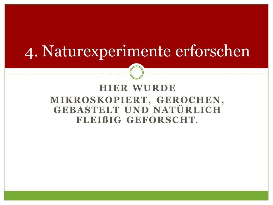 HIER WURDE MIKROSKOPIERT, GEROCHEN, GEBASTELT UND NATÜRLICH FLEIßIG GEFORSCHT. 4. Naturexperimente erforschen