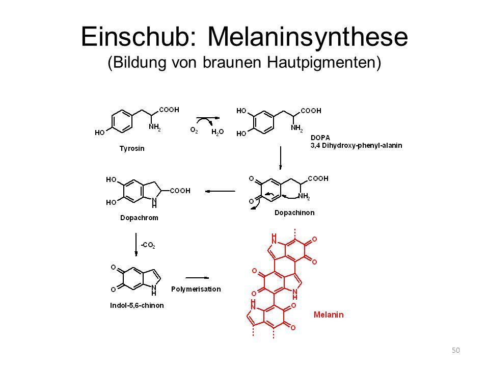 50 Einschub: Melaninsynthese (Bildung von braunen Hautpigmenten)