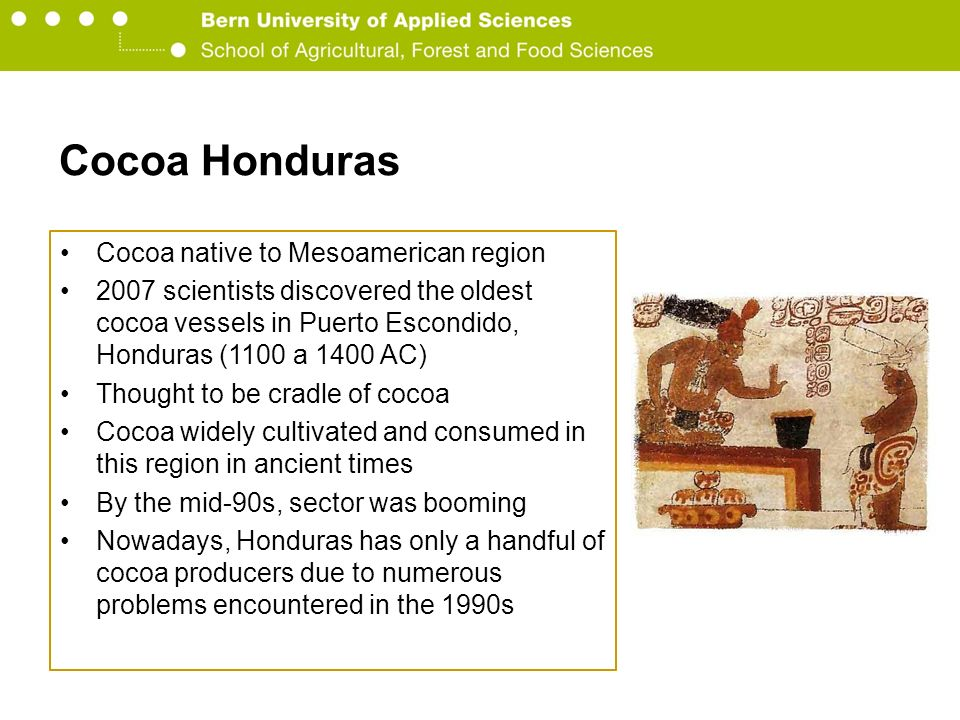 Berner Fachhochschule Hochschule für Agrar-, Forst- und Lebensmittelwissenschaften HAFL Cocoa Honduras Cocoa native to Mesoamerican region 2007 scientists discovered the oldest cocoa vessels in Puerto Escondido, Honduras (1100 a 1400 AC) Thought to be cradle of cocoa Cocoa widely cultivated and consumed in this region in ancient times By the mid-90s, sector was booming Nowadays, Honduras has only a handful of cocoa producers due to numerous problems encountered in the 1990s