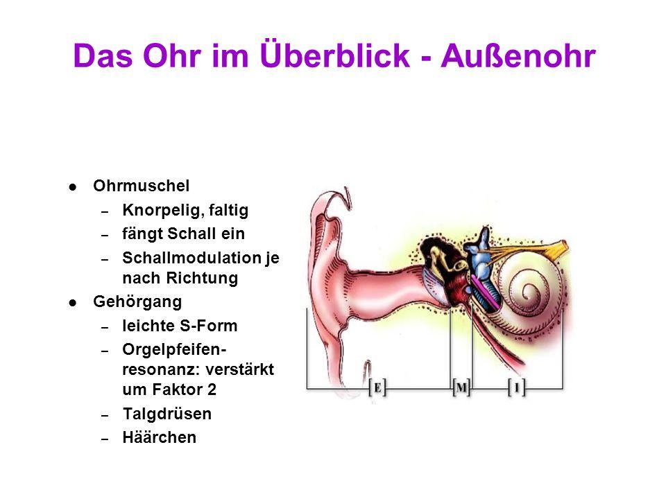10 Das Ohr im Überblick Ohrmuschel mit Gehörgang Mittelohr Innenohr Hörnerv Auditorischer Pfad Cortex