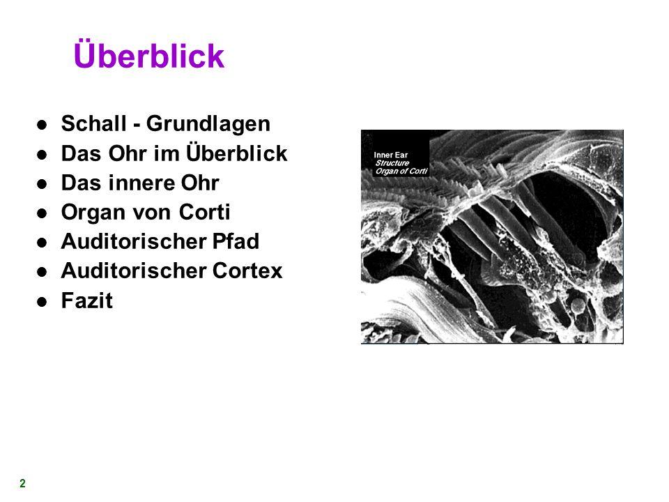 5. Mai 2005 1 Das Ohr und sein Modell Dr. Fridtjof Feldbusch Department of Computer Science University of Karlsruhe Auszug bearbeitet: von I. Müller