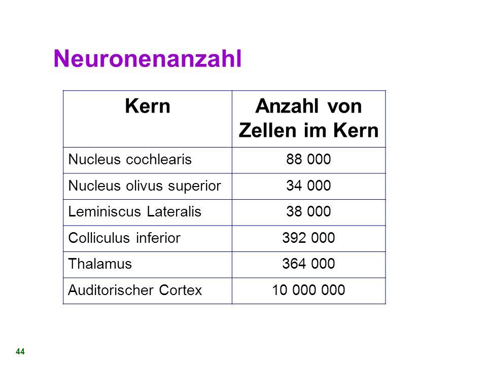43 Der auditorische Pfad Drei Komponenten: Das auditorische Sinnesorgan Der Hörnerv Die auditorischen Gebiete im Gehirn