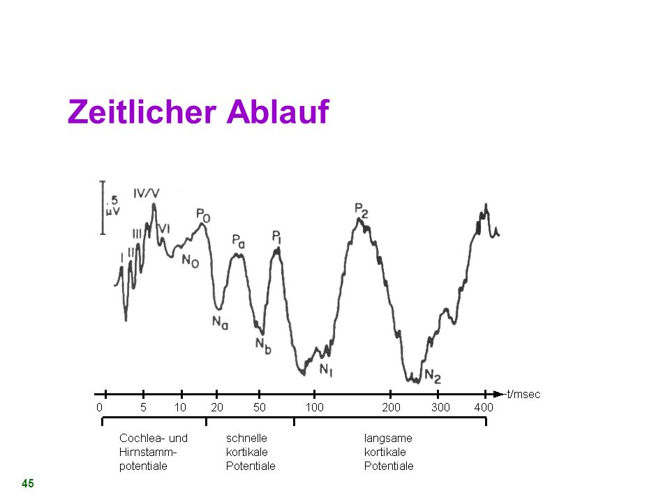 44 Neuronenanzahl KernAnzahl von Zellen im Kern Nucleus cochlearis88 000 Nucleus olivus superior34 000 Leminiscus Lateralis38 000 Colliculus inferior3