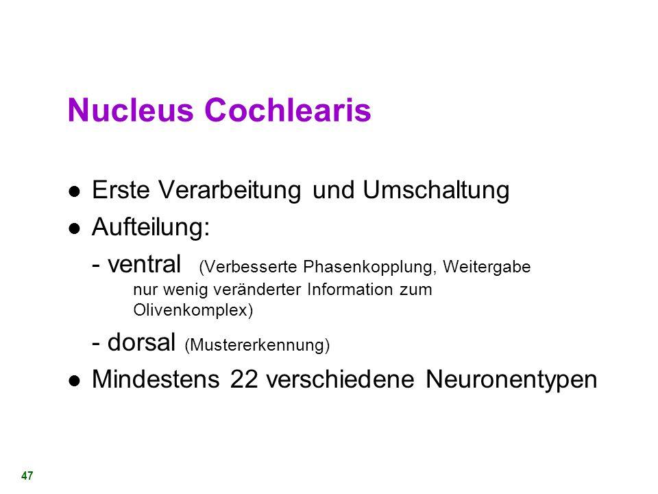 46 Nucleus Cochlearis