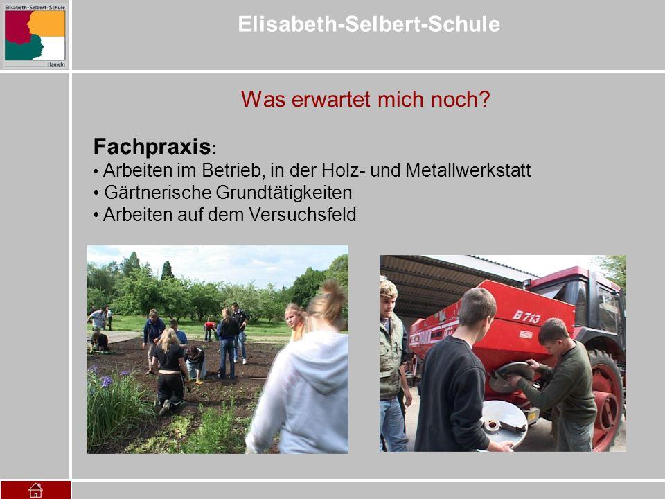 Elisabeth-Selbert-Schule Was erwartet mich noch? Fachpraxis : Arbeiten im Betrieb, in der Holz- und Metallwerkstatt Gärtnerische Grundtätigkeiten Arbe
