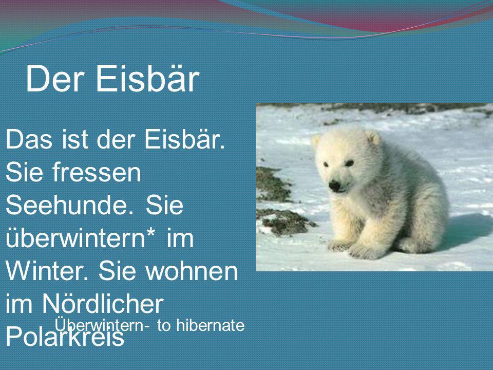 Der Eisbär Das ist der Eisbär. Sie fressen Seehunde. Sie überwintern* im Winter. Sie wohnen im Nördlicher Polarkreis Überwintern- to hibernate