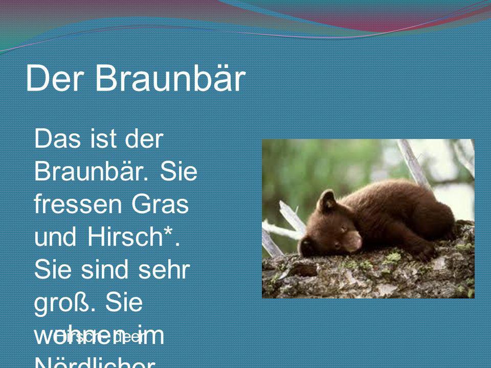 Der Braunbär Das ist der Braunbär. Sie fressen Gras und Hirsch*. Sie sind sehr groß. Sie wohnen im Nördlicher Polarkreis Hirsch- deer