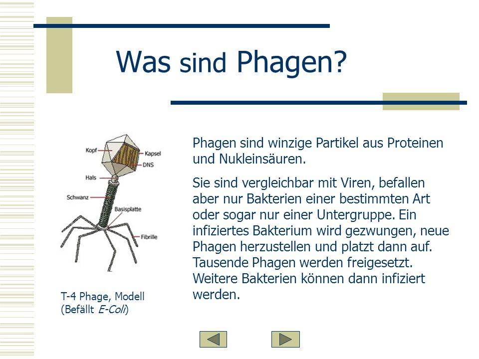 Was sind Phagen.Phagen sind winzige Partikel aus Proteinen und Nukleinsäuren.