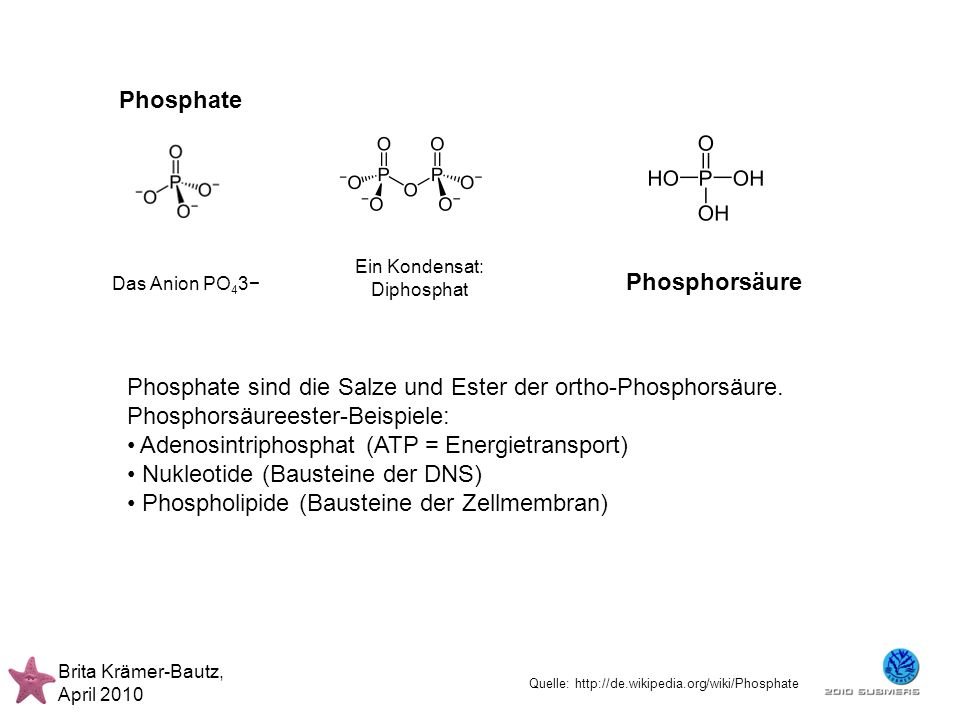 Brita Krämer-Bautz, April 2010 Ein Kondensat: Diphosphat Phosphorsäure Phosphate Das Anion PO 4 3 Phosphate sind die Salze und Ester der ortho-Phospho