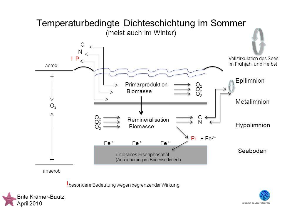 Temperaturbedingte Dichteschichtung im Sommer (meist auch im Winter) Brita Krämer-Bautz, April 2010 Epilimnion Metalimnion Hypolimnion Seeboden Primär