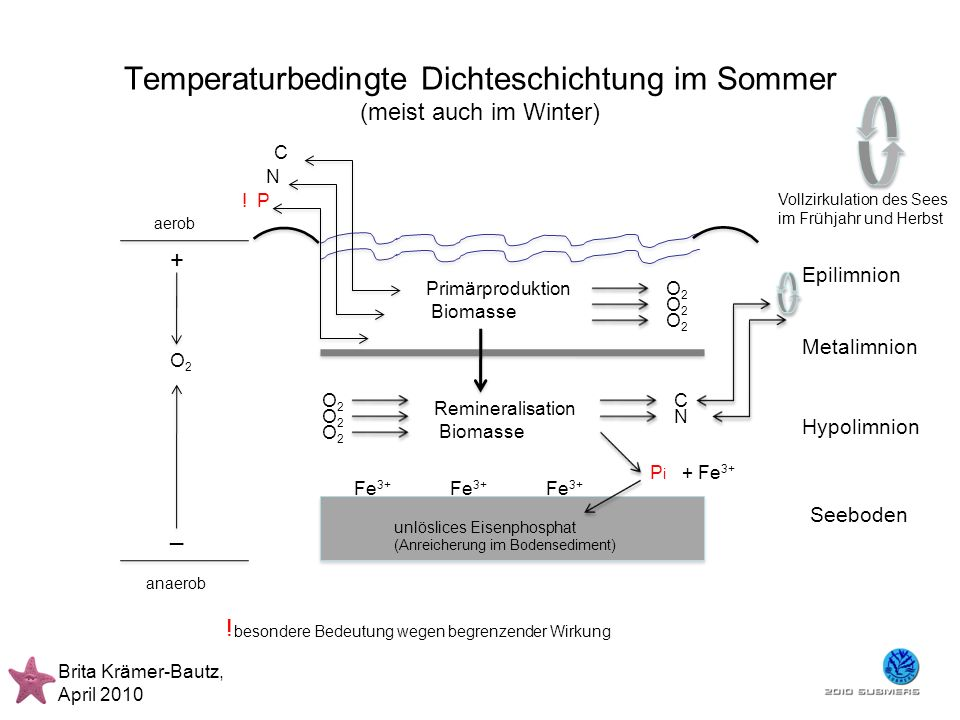 Eutrophierung >>> Umkippen eines Sees Brita Krämer-Bautz, April 2010 Epilimnion Metalimnion Hypolimnion Seeboden Primärproduktion Biomasse O2O2 O2O2 O2O2 C N C N .