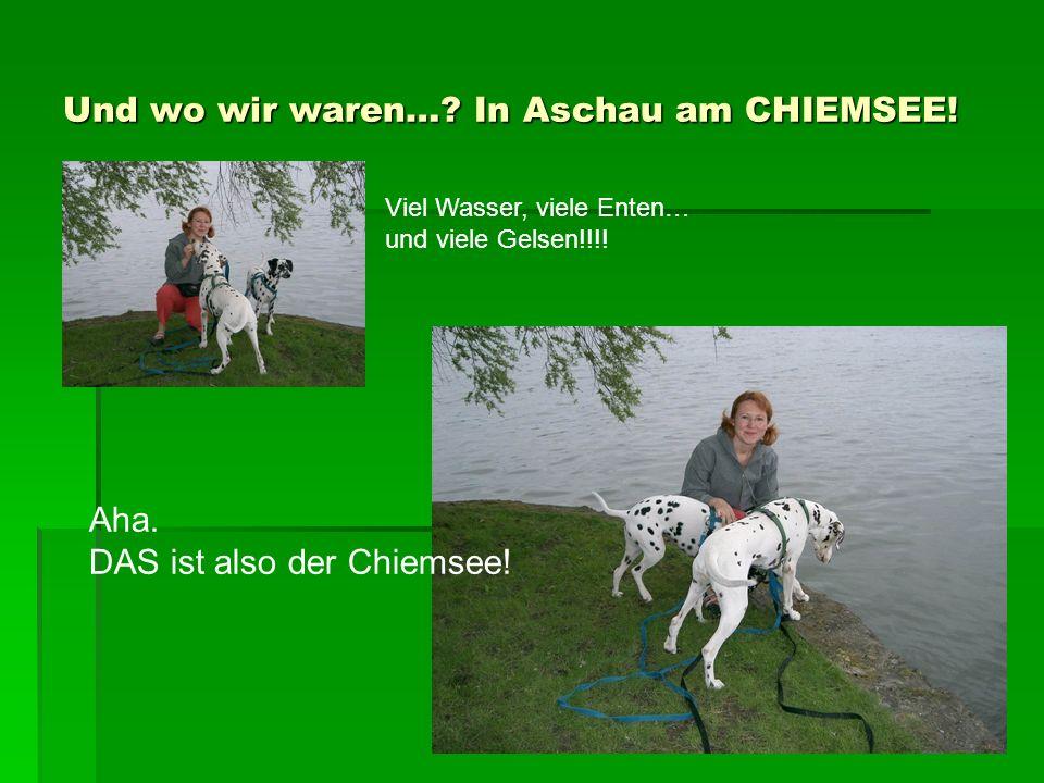 Und wo wir waren…. In Aschau am CHIEMSEE. Viel Wasser, viele Enten… und viele Gelsen!!!.