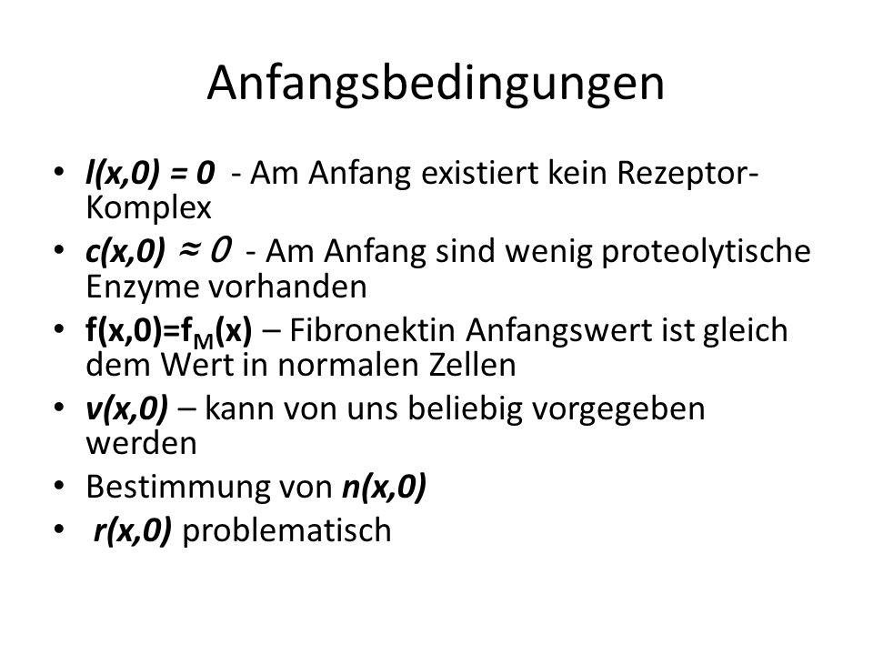 Anfangsbedingungen l(x,0) = 0 - Am Anfang existiert kein Rezeptor- Komplex c(x,0) 0 - Am Anfang sind wenig proteolytische Enzyme vorhanden f(x,0)=f M (x) – Fibronektin Anfangswert ist gleich dem Wert in normalen Zellen v(x,0) – kann von uns beliebig vorgegeben werden Bestimmung von n(x,0) r(x,0) problematisch