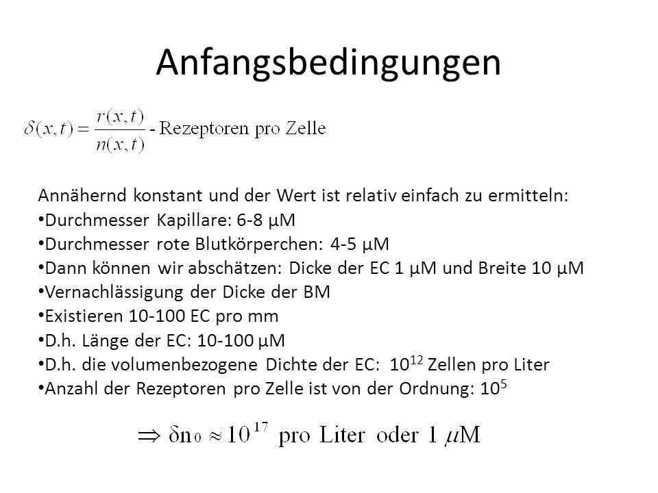 Annähernd konstant und der Wert ist relativ einfach zu ermitteln: Durchmesser Kapillare: 6-8 µM Durchmesser rote Blutkörperchen: 4-5 µM Dann können wir abschätzen: Dicke der EC 1 µM und Breite 10 µM Vernachlässigung der Dicke der BM Existieren 10-100 EC pro mm D.h.
