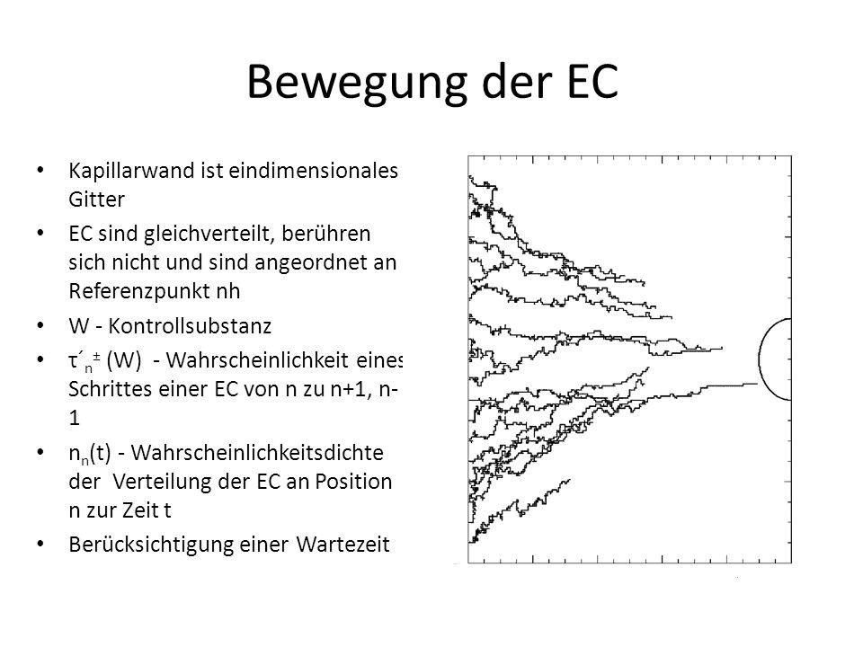 Bewegung der EC Kapillarwand ist eindimensionales Gitter EC sind gleichverteilt, berühren sich nicht und sind angeordnet an Referenzpunkt nh W - Kontrollsubstanz τ´ n ± (W) - Wahrscheinlichkeit eines Schrittes einer EC von n zu n+1, n- 1 n n (t) - Wahrscheinlichkeitsdichte der Verteilung der EC an Position n zur Zeit t Berücksichtigung einer Wartezeit