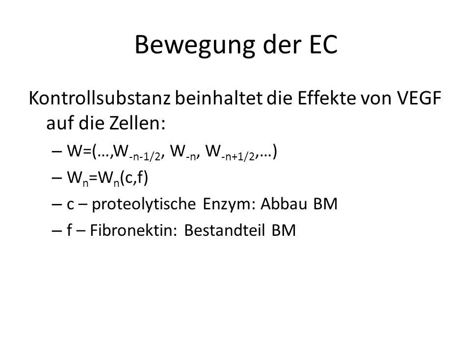 Bewegung der EC Kontrollsubstanz beinhaltet die Effekte von VEGF auf die Zellen: – W=(…,W -n-1/2, W -n, W -n+1/2,…) – W n =W n (c,f) – c – proteolytische Enzym: Abbau BM – f – Fibronektin: Bestandteil BM