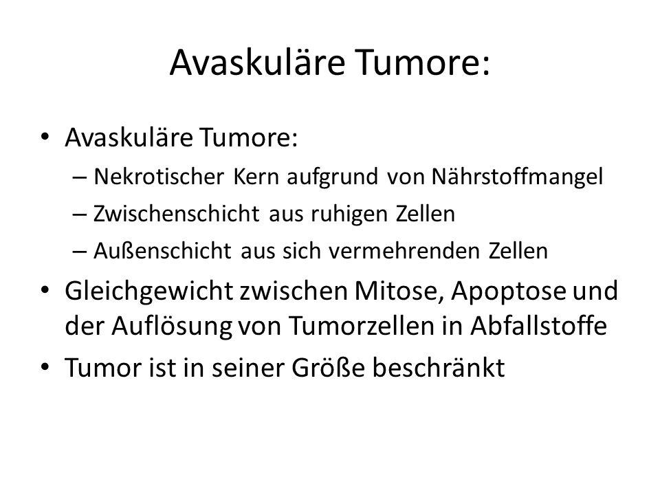 Avaskuläre Tumore: – Nekrotischer Kern aufgrund von Nährstoffmangel – Zwischenschicht aus ruhigen Zellen – Außenschicht aus sich vermehrenden Zellen Gleichgewicht zwischen Mitose, Apoptose und der Auflösung von Tumorzellen in Abfallstoffe Tumor ist in seiner Größe beschränkt
