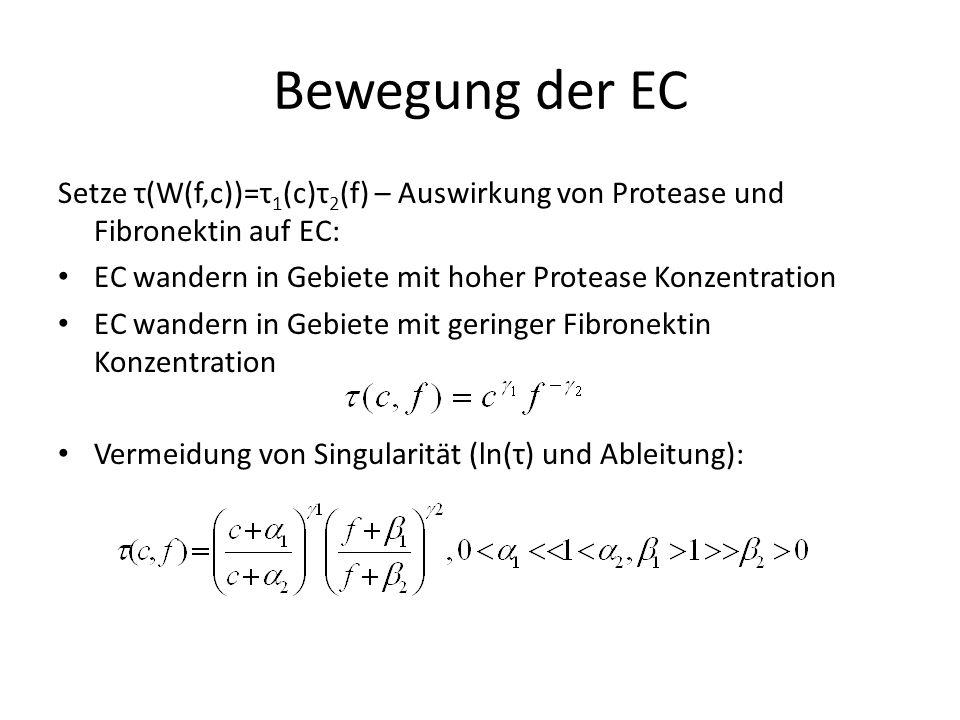 Bewegung der EC Setze τ(W(f,c))=τ 1 (c)τ 2 (f) – Auswirkung von Protease und Fibronektin auf EC: EC wandern in Gebiete mit hoher Protease Konzentration EC wandern in Gebiete mit geringer Fibronektin Konzentration Vermeidung von Singularität (ln(τ) und Ableitung):