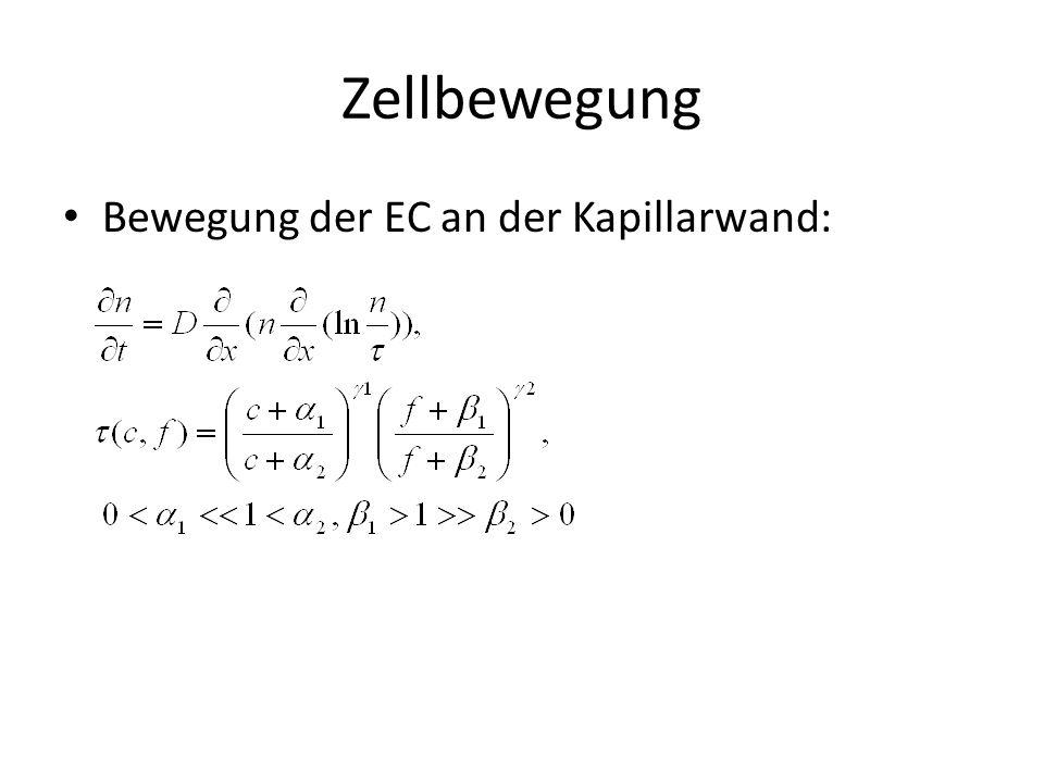 Zellbewegung Bewegung der EC an der Kapillarwand: