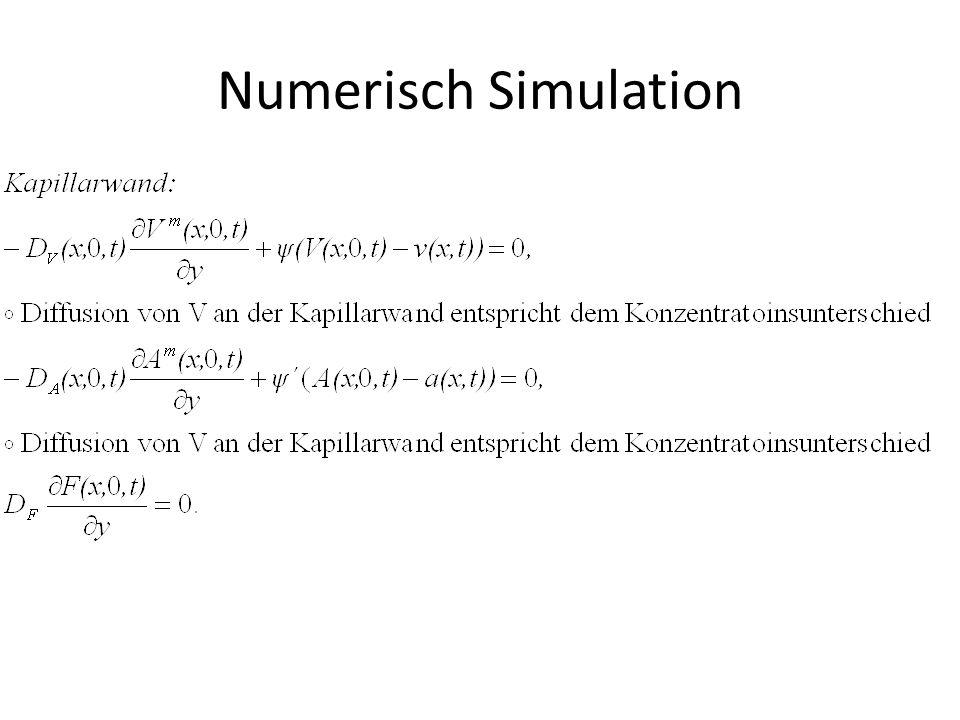 Numerisch Simulation
