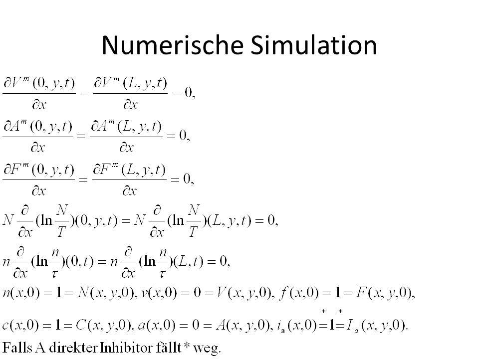 Numerische Simulation