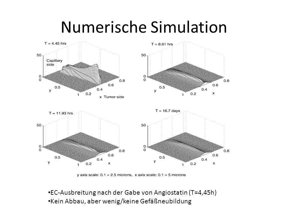 Numerische Simulation EC-Ausbreitung nach der Gabe von Angiostatin (T=4,45h) Kein Abbau, aber wenig/keine Gefäßneubildung