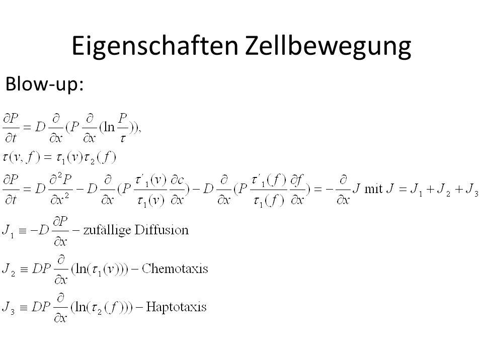 Eigenschaften Zellbewegung Blow-up:
